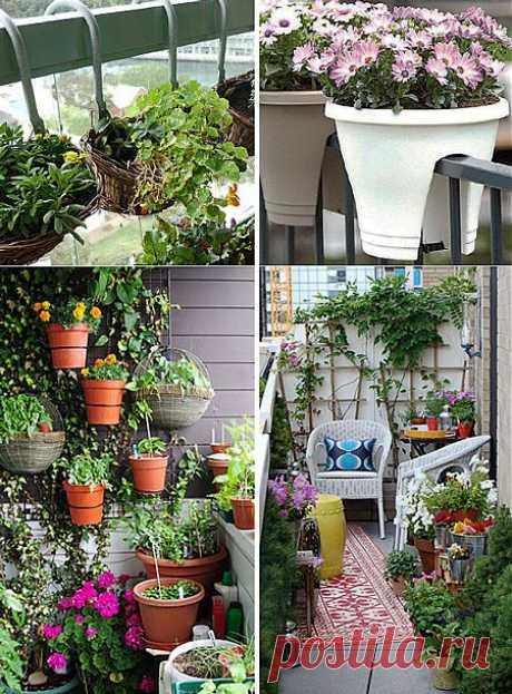 Цветы для балкона | Наш уютный дом