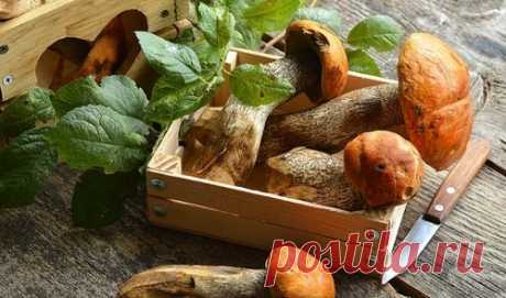 Как приготовить грибы подосиновики - 8 рецептов (с фото)
