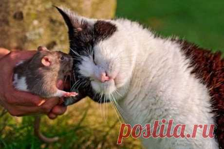 Забавные картинки с животными. Подборка №zabavatut-45370709022020 . Тут забавно !!!