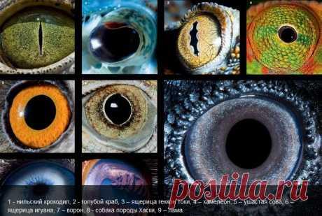 Поглазеем: Что видим мы, и что видят животные   National Geographic Россия