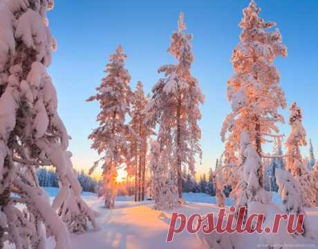 Сказочная Лапландия. Автор фото — Антон Петрусь: nat-geo.ru/photo/user/50290/
