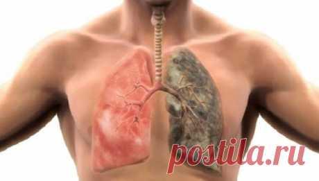 - Как очистить легкие от смол и никотина - Лёгкие, нарушения и натуральные средства -