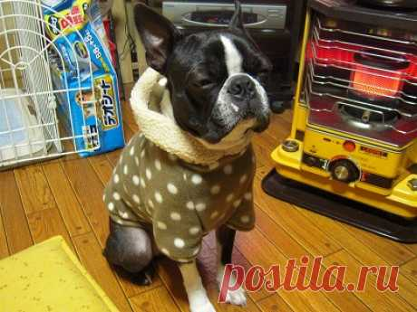 толстовка с капюшоном из флиса - modapess -модная собачка