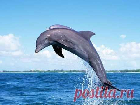 Морские акробаты: Невероятные прыжки дельфинов: Круче чем в дельфинарии
