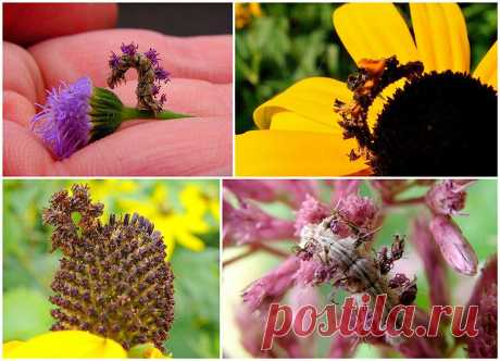 Чудеса мимикрии Гусеница-цветок : НОВОСТИ В ФОТОГРАФИЯХ