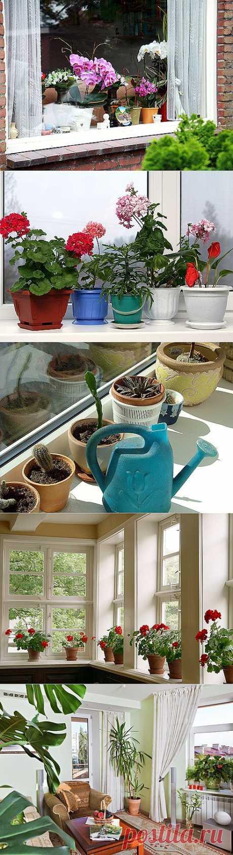 Растения для южных, северных, восточных и западных окон