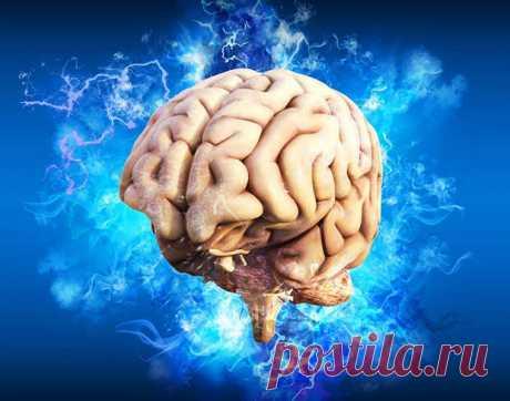 Фрукты и овощи для здоровья мозга - Будь в форме! - медиаплатформа МирТесен Нам известно, что важно вводить в свой пищевой рацион как можно больше овощей и фруктов. Но особое место среди них занимают те, которые имеют синюю, пурпурную и фиолетовую окраску. Эти продукты содержат необходимые организму антиоксиданты и другие вещества, важные для здоровья мозга и нервной
