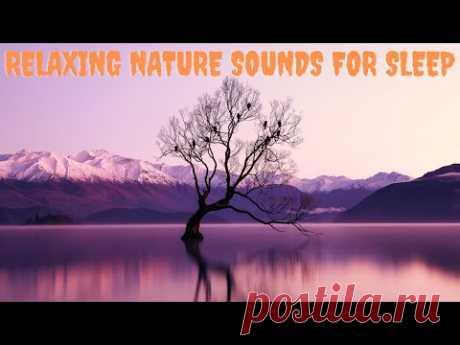 Relaxing nature sounds for sleep - Звуки природы, пение соловья, звуки леса, для расслабления, сна, медитации, йоги ... Расслабляющие звуки природы для сна. Всем хорошего дня и ночи и спасибо за просмотр! Спасибо всем за просмотр видео, надеюсь, у вас хороший день или хороший сон.
