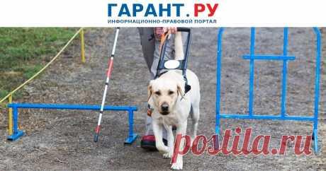Сроки использования предоставляемых инвалидам технических средств реабилитации могут скорректировать В частности, собак-проводников предлагается предоставлять нуждающимся гражданам-инвалидам бессрочно.