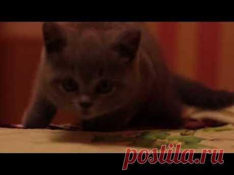 funny cats - YouTube