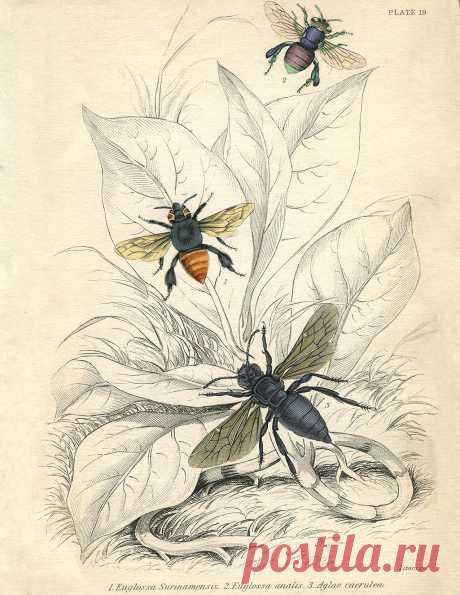 Vintage-Printable-Bees-sm-GraphicsFairy.jpg (1275×1650)