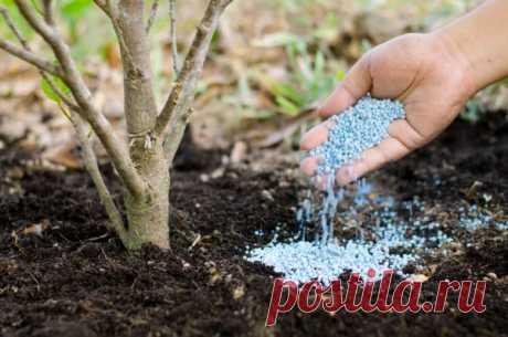 Правила подкормки плодовых кустарников в сентябре Selo.Guru — интернет портал о сельском хозяйстве