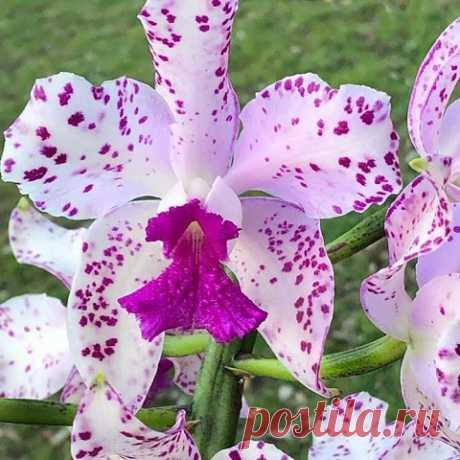 Вы только посмотрите на эту орхидею!   OK.RU