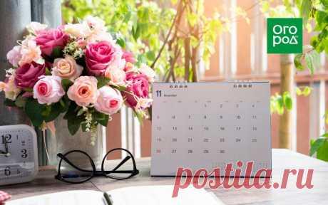 Календарь ухода за розами на весь год | Розы (Огород.ru)