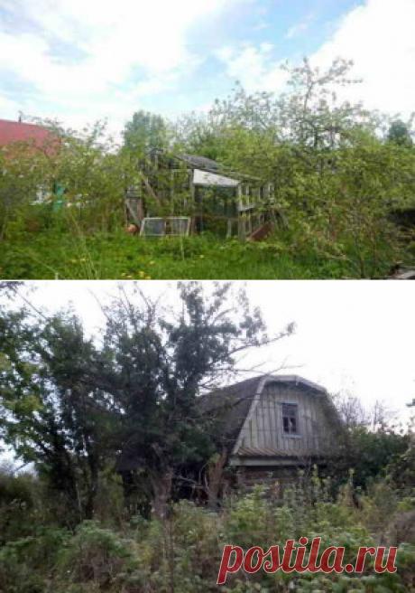 Что делать с запущенным садовым участком | Дача - впрок