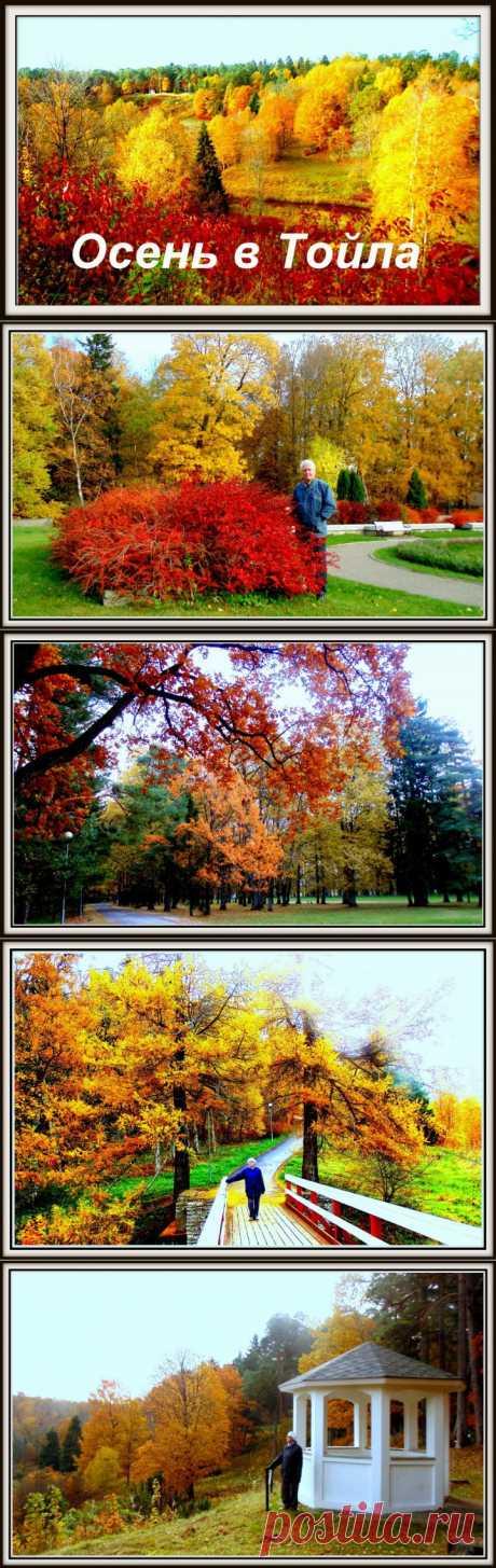 Осень в Тойла Ору. Эстония |
