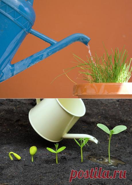 Как правильно поливать растения в домашнем огороде