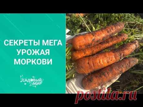 Как сохранить урожай  свежей моркови. Такой способ подойдет  и для холодильника, и для погреба.