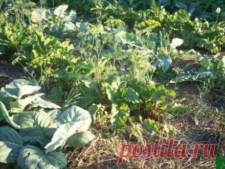 """Почвенные труженики за сезон должны съедать до 10 кг органических остатков растений на 1 м2 Какую землю мы называем плодородной, живой? Плодородная почва – та, в которой есть жизнь!Ученые доказали, что плодородие почвы создает """"живое вещество"""", состоящее из мириадов почвенных бактерий, микроскопических грибков, червей и прочей живности. Они посчитали, что слой почвы в 30 см..."""
