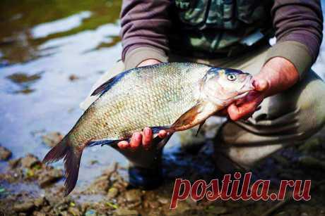 Лещ весной. Прикормка на рыбалке | Блоги о даче и огороде, рецептах, красоте и правильном питании, рыбалке, ремонте и интерьере