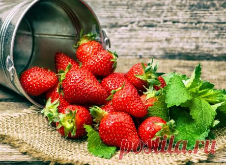 Как подкормить клубнику и получить крупные ягоды?