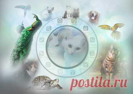 Выбираем домашних питомцев по своему знаку зодиака | Нина Стрелкова. Разные слова | Яндекс Дзен ✨ Автор: астролог Нина Стрелкова ✧ Многими замечено, что собаки часто похожи на своих хозяев. И не только собаки. Выбирая домашнего питомца, многие люди неосознанно стремятся подобрать себе «двойника» из животного мира. Такой представитель фауны является своеобразным талисманом человека...