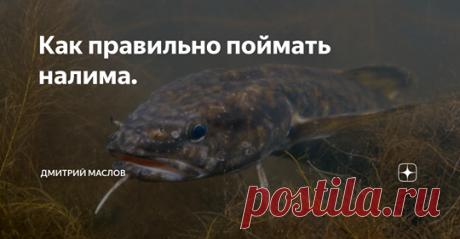 Рыбалка для людей