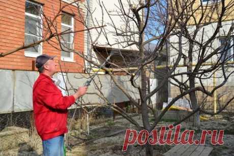 Хотели как лучше: 7 ошибок садовода, от которых гибнут деревья | Уход за садом (Огород.ru)