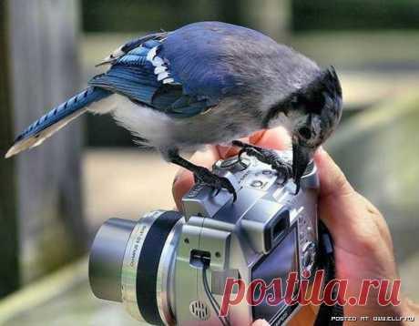 Птичку покажи...