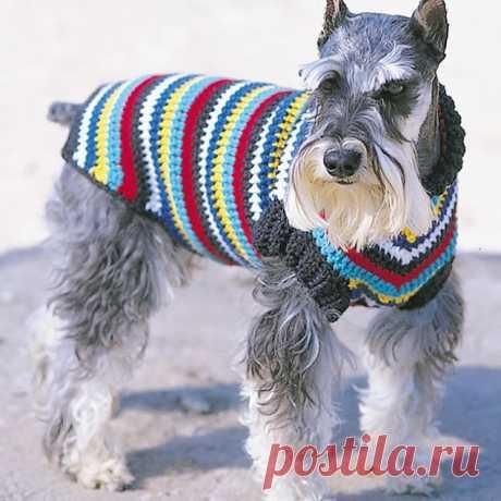 Как связать свитер для собаки своими руками - 5 мастер-классов
