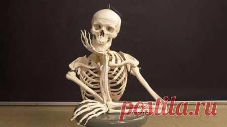 Знаете ли вы, что в момент рождения количество костей в теле человека значительно больше, чем во взрослом возрасте? На самом деле кости, хоть они и скрыты от наших глаз, позволяют Homo Sapiens…