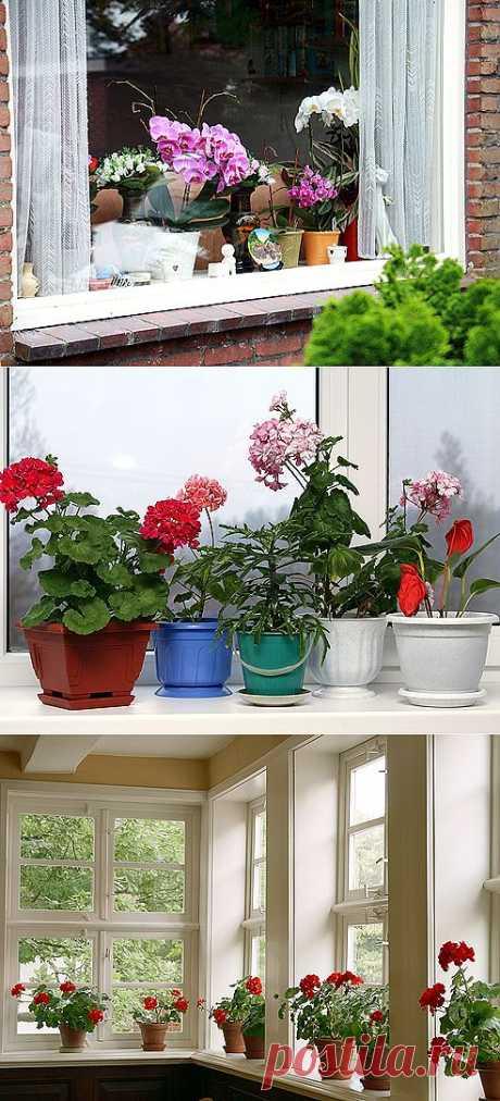 Растения для южных, северных, восточных и западных окон | МОЯ КВАРТИРА