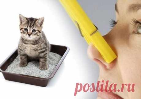 Как устранить кошачий запах дома