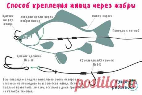 Лучшая оснастка для живца при ловле хищника | Кухня рыбака | Яндекс Дзен