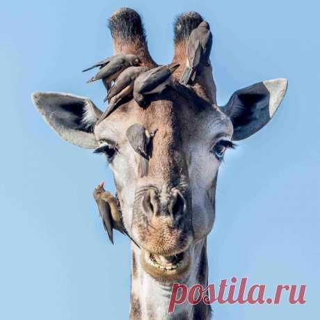 #cuteanimals: Wildlife Animal Portraits por Irene Nathanson