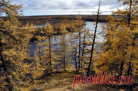 Осень в Заполярье. Снято Анатолием Емельяновым ( на реке Молодо, Якутия.