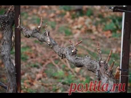 Обрезка винограда осенью (Pruning grapes in autumn) - YouTube