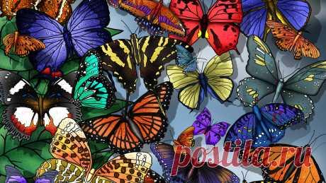 1299755990_286673-1366x768-butterfly.jpg (1366×768)