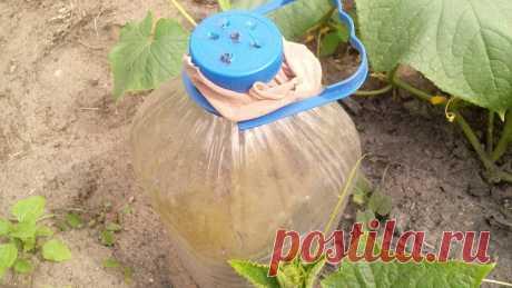 Бутылки-кормилицы — мои помощники в уходе за огурцами, просто наполняю их органикой | Собираем урожай | Яндекс Дзен