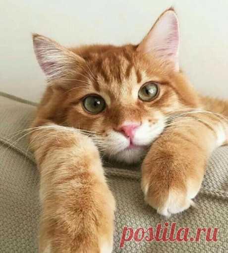 Котик по имени Солнышко