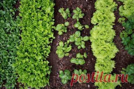 Las faltas difundidas a la siembra hortalizas
