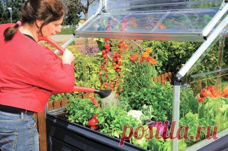 Европейцы изобрели новый вид теплиц. Наши огородники могут сделать такие сами | Маленький сад на краю Вселенной | Яндекс Дзен