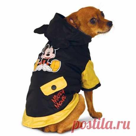 Дождевик Triol Disney Mickey для собак – купить недорого в интернет-магазине товаров для собак ЮниЗоо.ру. Отзывы, цены и доставка по Москве и России.