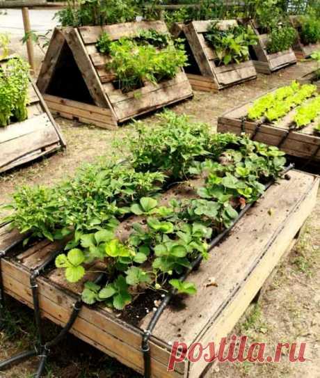 16 идей высоких грядок, которые позволят получить максимальный урожай и увеличить место в саду