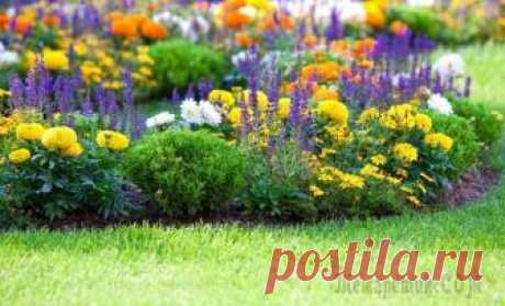 Как правильно сочетать растения на клумбе по цветам Для создания красивой клумбы мало сочетать растения по срокам цветения, требовательности к почве, высоте и формам. Необходимо учитывать также такой немаловажный фактор как цвет – вы же не хотите, чтоб...