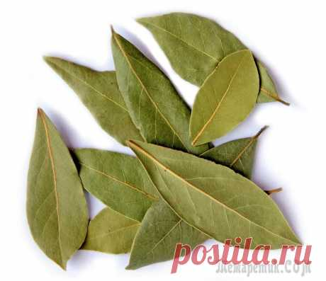 Bay leaf – your house doctor