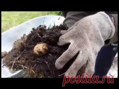 Червяки и личинки живущие под мульчей - YouTube