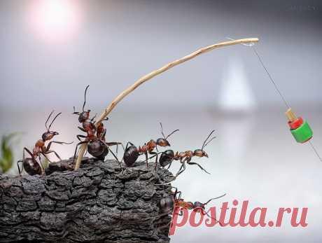 Андрей Павлов (Антрей). Сделано в природе.