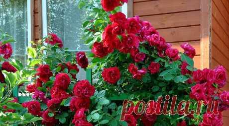 Энциклопедия растений: фото, описание и уход за садово-огородными и комнатными растениями