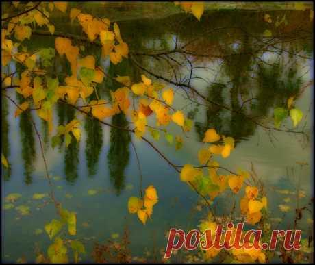 Фото жизнь - Janna Daderko - корневой каталог - Осенняя акварель